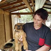 Adopt A Pet :: Diana - Olympia, WA