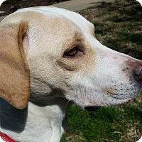 Adopt A Pet :: Lady Anne - Clarksville, TN