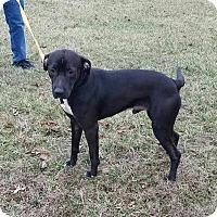 Adopt A Pet :: Chuck - Cameron, MO
