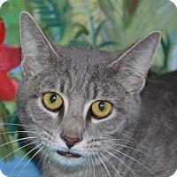 Adopt A Pet :: Meyer - Englewood, FL