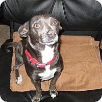 Adopt A Pet :: Maxie - Phoenix, AZ