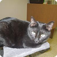 Adopt A Pet :: Megan - Medina, OH