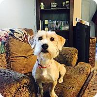 Adopt A Pet :: MAISEY - Higley, AZ