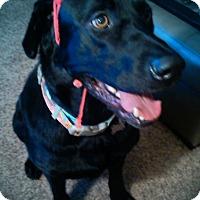 Adopt A Pet :: Brisco - Gig Harbor, WA