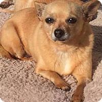 Adopt A Pet :: Gina - Fullerton, CA