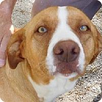 Adopt A Pet :: Kat - Oakland, AR