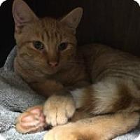 Adopt A Pet :: Albert - McHenry, IL