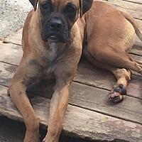 Adopt A Pet :: Fender - Del Rio, TX