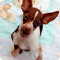 Adopt A Pet :: **CHARM - Peralta, NM
