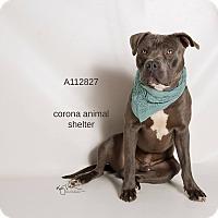 Adopt A Pet :: KENNEL 31 - Corona, CA