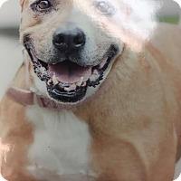 Adopt A Pet :: Parker - Jupiter, FL