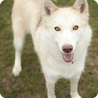 Adopt A Pet :: Freedom - Harvard, IL