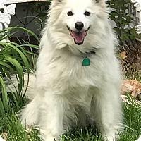 Adopt A Pet :: Bouncer - St. Louis, MO