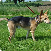Adopt A Pet :: Crisko - Hawk Point, MO
