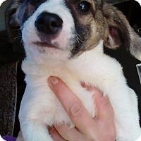 Adopt A Pet :: Bundle of cutie puppies - El Cajon, CA