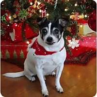 Adopt A Pet :: Woody - Jacksonville, FL