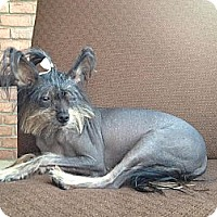 Adopt A Pet :: Izzy Bare - Wytheville, VA