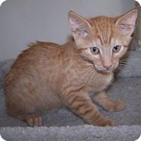 Adopt A Pet :: K-Guffey1-Kennedy - Colorado Springs, CO