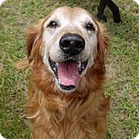 Adopt A Pet :: Charlie - Baton Rouge, LA