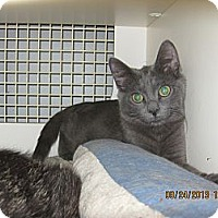 Adopt A Pet :: Peter - West Dundee, IL