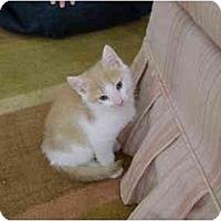 Adopt A Pet :: Sandy - Westfield, MA