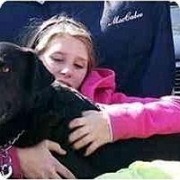 Adopt A Pet :: Joe - Cumming, GA