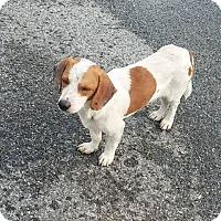 Adopt A Pet :: Gael Monfils - Brooklyn, NY