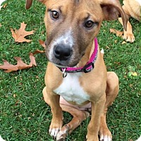 Adopt A Pet :: Delilah - Wappingers, NY