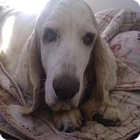 Adopt A Pet :: Gina - Acton, CA