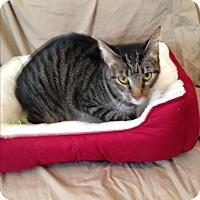 Adopt A Pet :: Sarge - Simpsonville, SC