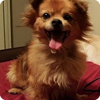 Adopt A Pet :: Gerald - Canoga Park, CA