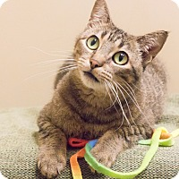 Adopt A Pet :: Leeta - Chicago, IL