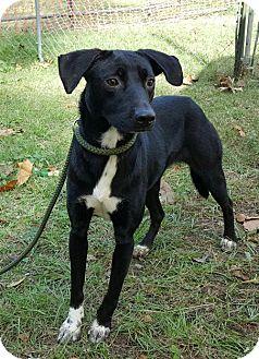 Retriever (Unknown Type) Mix Dog for adoption in Livingston, Texas - Aadi