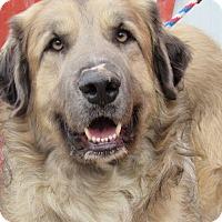 Adopt A Pet :: Monty - Kiowa, OK