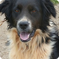 Adopt A Pet :: Edwardo - Anderson, SC