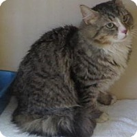 Adopt A Pet :: Kat - Lincolnton, NC