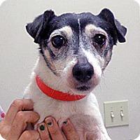 Adopt A Pet :: Betty - Wildomar, CA