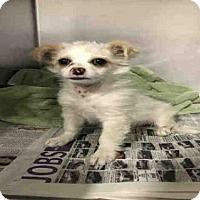 Adopt A Pet :: *CLOUD - Bakersfield, CA