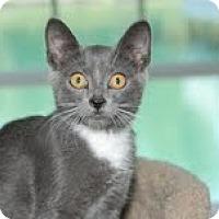 Adopt A Pet :: Woody - Arlington, VA