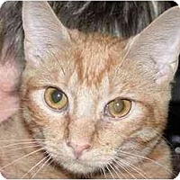 Adopt A Pet :: Tee Tee - Kirkwood, DE