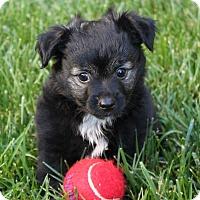 Adopt A Pet :: Cole - La Habra Heights, CA