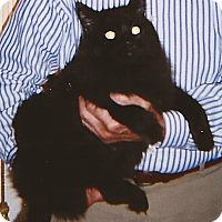 Adopt A Pet :: Blackie - N. Billerica, MA