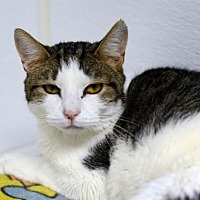 Adopt A Pet :: Athena150835 - Atlanta, GA