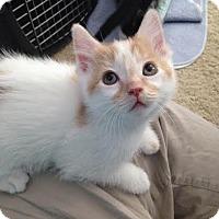 Adopt A Pet :: Shine - Eagan, MN