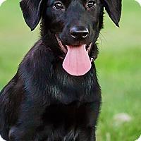 Adopt A Pet :: Jezabel - Owensboro, KY