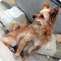 Adopt A Pet :: Tic Tac - Bridgeton, MO