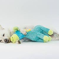 Adopt A Pet :: Joey - Jacksonville, FL
