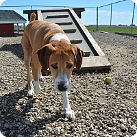 Adopt A Pet :: Banjo - Grinnell, IA
