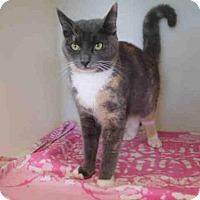 Adopt A Pet :: FEATHER - McKinleyville, CA