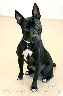 Terrier (Unknown Type, Medium) Mix Dog for adoption in Appleton, Wisconsin - Kai